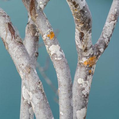 types de bois chêne